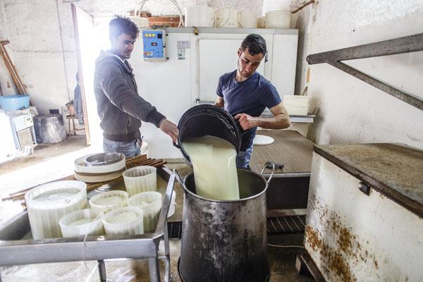 Pastori in Sicilia: pecore, latte e cannoli
