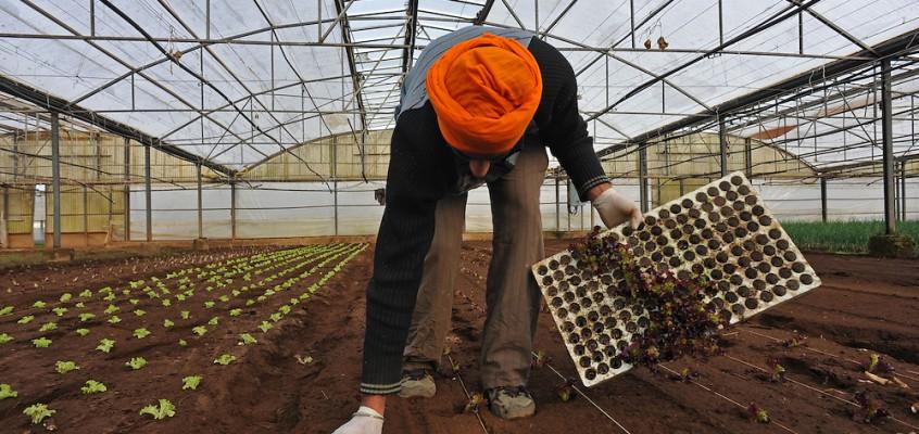 I Sikh dell'Agro Pontino
