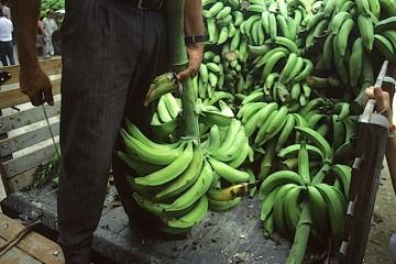Mercato delle banane in Colombia