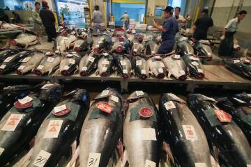 Expo 2015 – Il mercato del pesce di Hokkaiddo