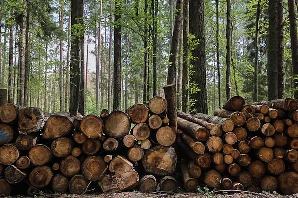 Polonia, l'ultima foresta vergine d'Europa