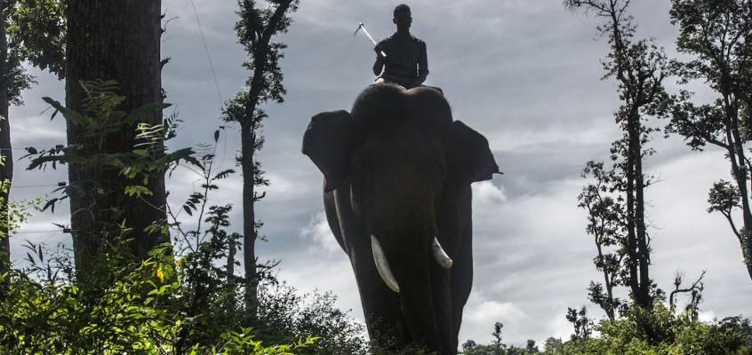 Gli elefanti d'India