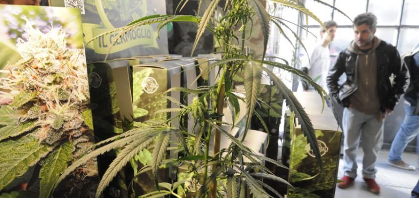 Il Salone Internazionale della Cannabis a Milano