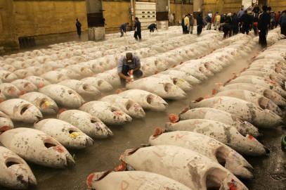 Il mercato dei tonni di Tokyo