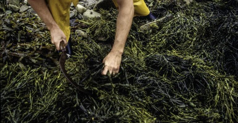 Nutrirsi con le alghe