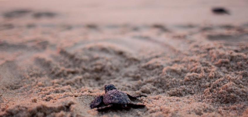 Messico, volontari in difesa delle tartarughe