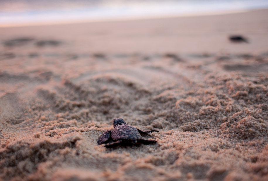 tortugas-19